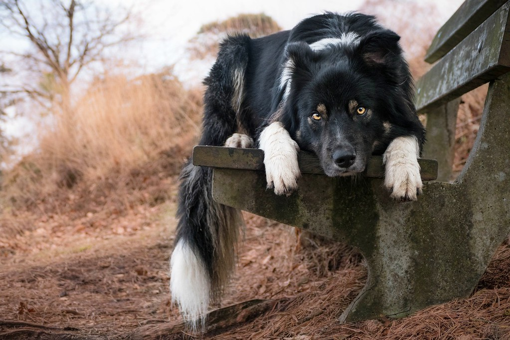 Lazy days, © Kirsten van Ravenhorst, Netherlands, I Love Dogs Because… (Ages 11 to 17) 3rd Place Winner, Dog Photographer of the Year