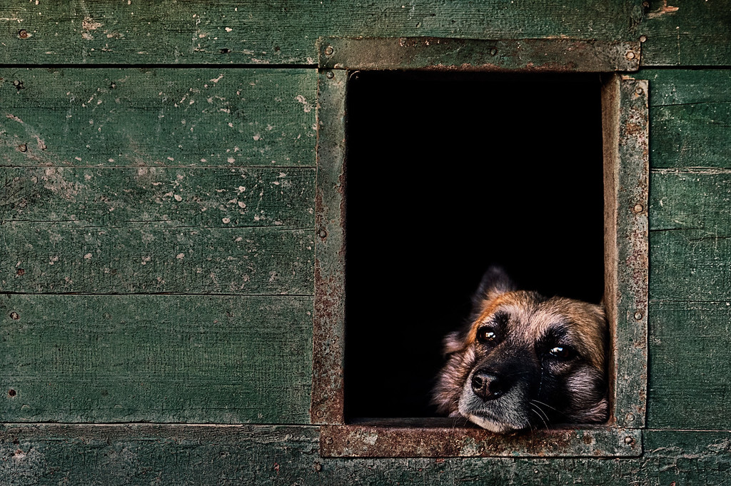 Life, © Igor Abramovich, UK, Oldies Category 2nd Place Winner, Dog Photographer of the Year