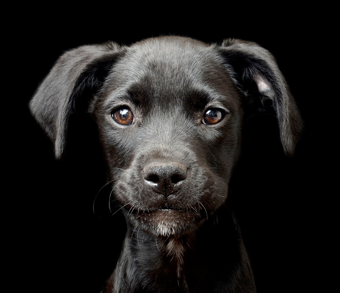 Patience of a Saint, © Tracy Kirby, Ireland, Puppies Category 2nd Place Winner, Dog Photographer of the Year