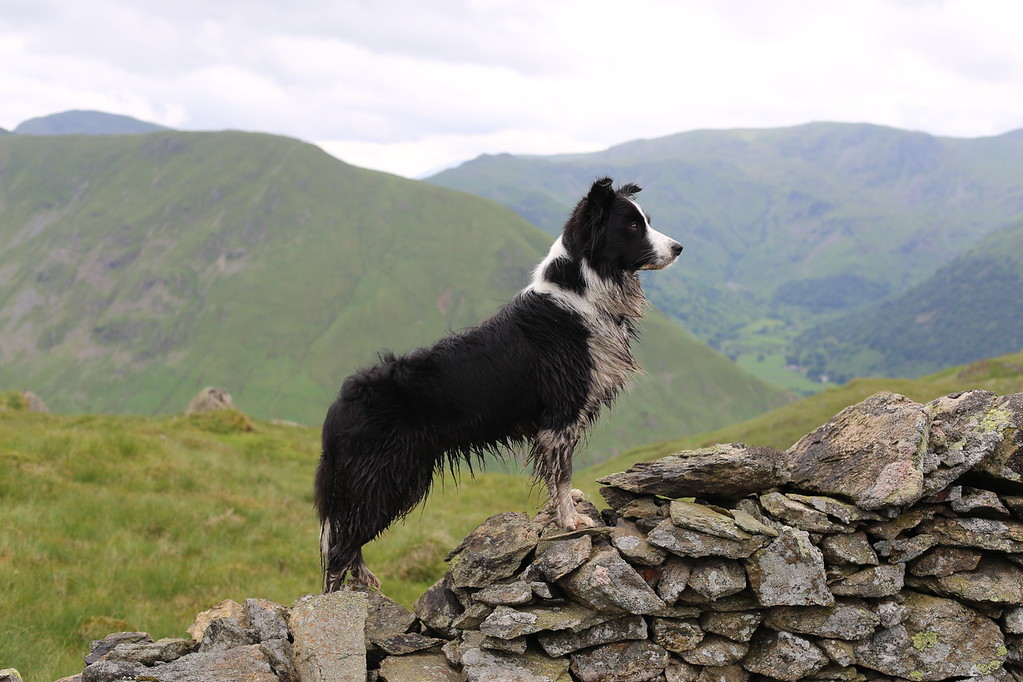 Mountain Hike, © Molly Wallis, UK, Judges' Special Mention I Love Dogs Because … (Aged 11 to 17), Dog Photographer of the Year