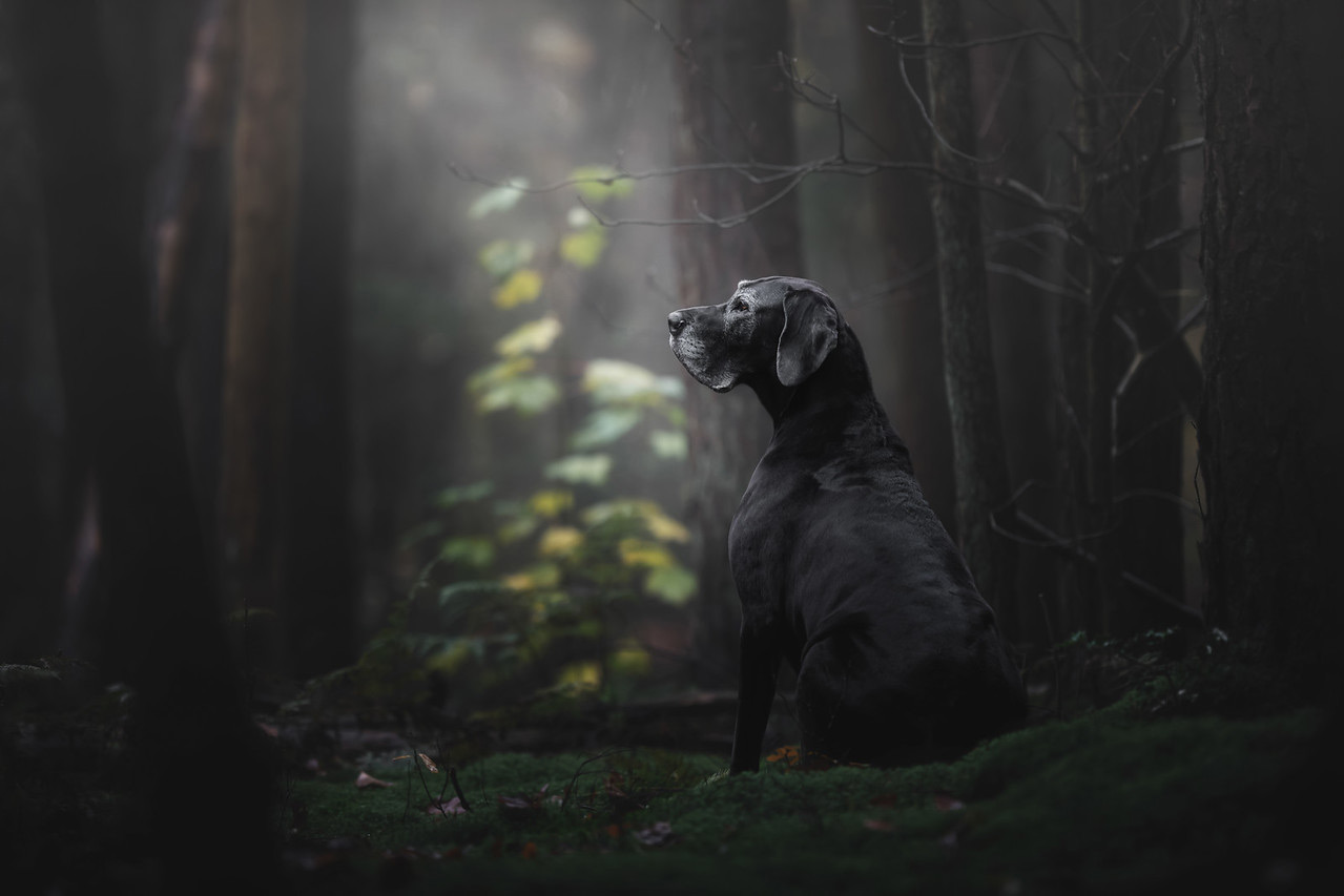 The lady of the mystery forest, © Monica van der Maden, Netherlands, Dog Photographer of the Year 2018 Overall Winner and Oldies Category 1st Place Winner, Dog Photographer of the Year