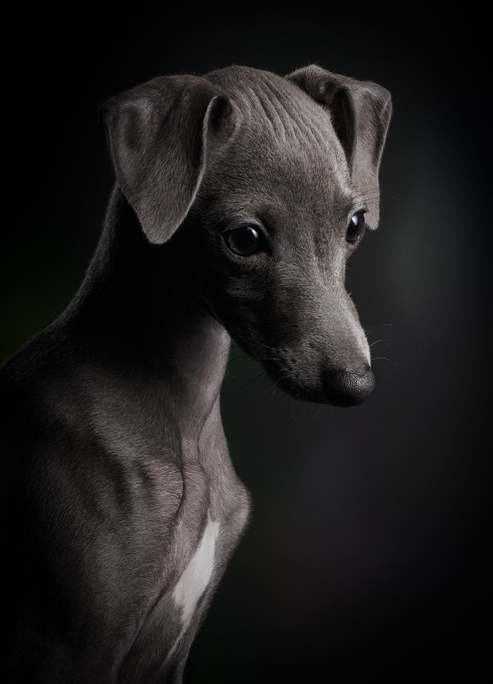 Little Ceylin, © Klaus Dyba, Germany, Puppies Category 1st Place Winner, Dog Photographer of the Year