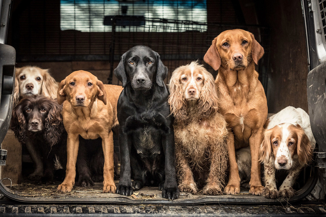 Wayne's Team, © Tracy Kidd, United Kingdom, Dogs at Work 1st Place Winner, Dog Photographer of the Year