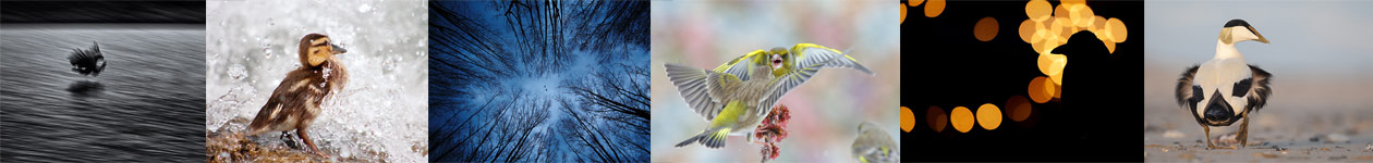 Fascinating Bird Photography - Swiss Ornithological Institute in Sempach