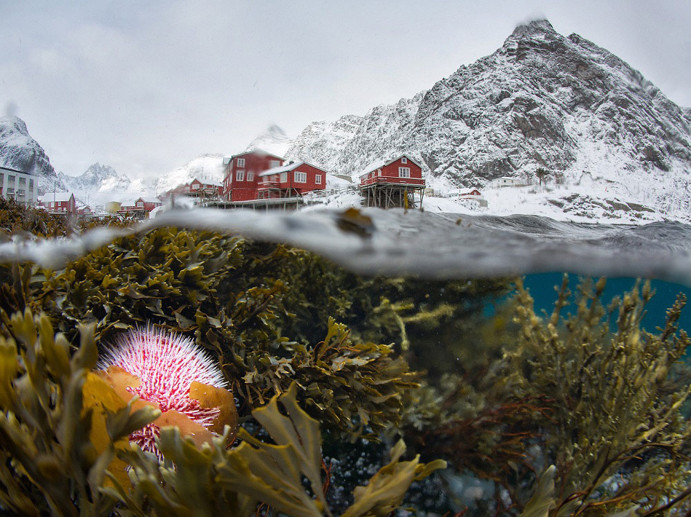 Underwater view of the winter Lofoten, © Sergey Lukankin, 1st Place Winner Nature professional, Fine Art Photography Awards