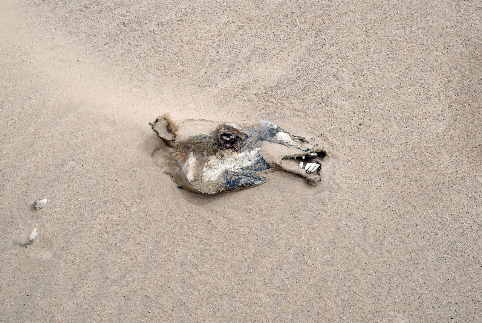 Desert Camel, © Adrian Brown, Expert 2nd, FIX Photo Festival Awards