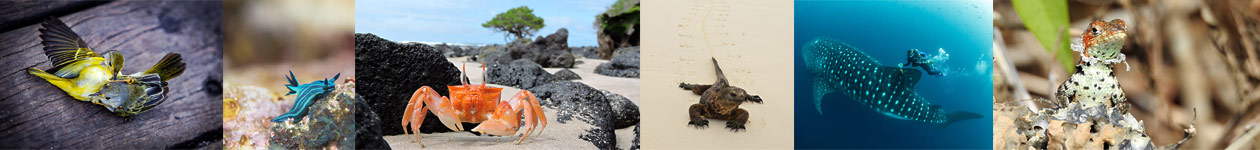 Galapagos Photography Competition