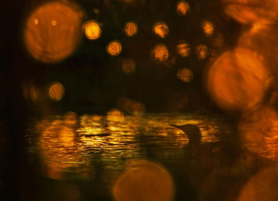 Evening mood at a fenland lake, © Klaus Tamm (DE), 1st place in category Birds, GDT European Nature Photographer of the Year