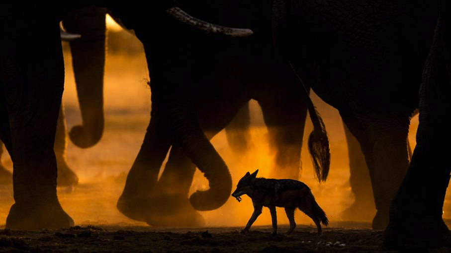 In the footsteps of giants, © Sarah Skinner (GB), 1st place in category Mammals, GDT European Nature Photographer of the Year