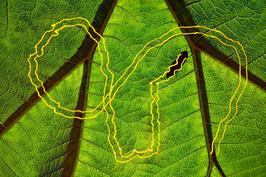 Follow the Yellow Brick Road!, © Cristobal Serrano (ES), 1st place in category Other Animals, GDT European Nature Photographer of the Year