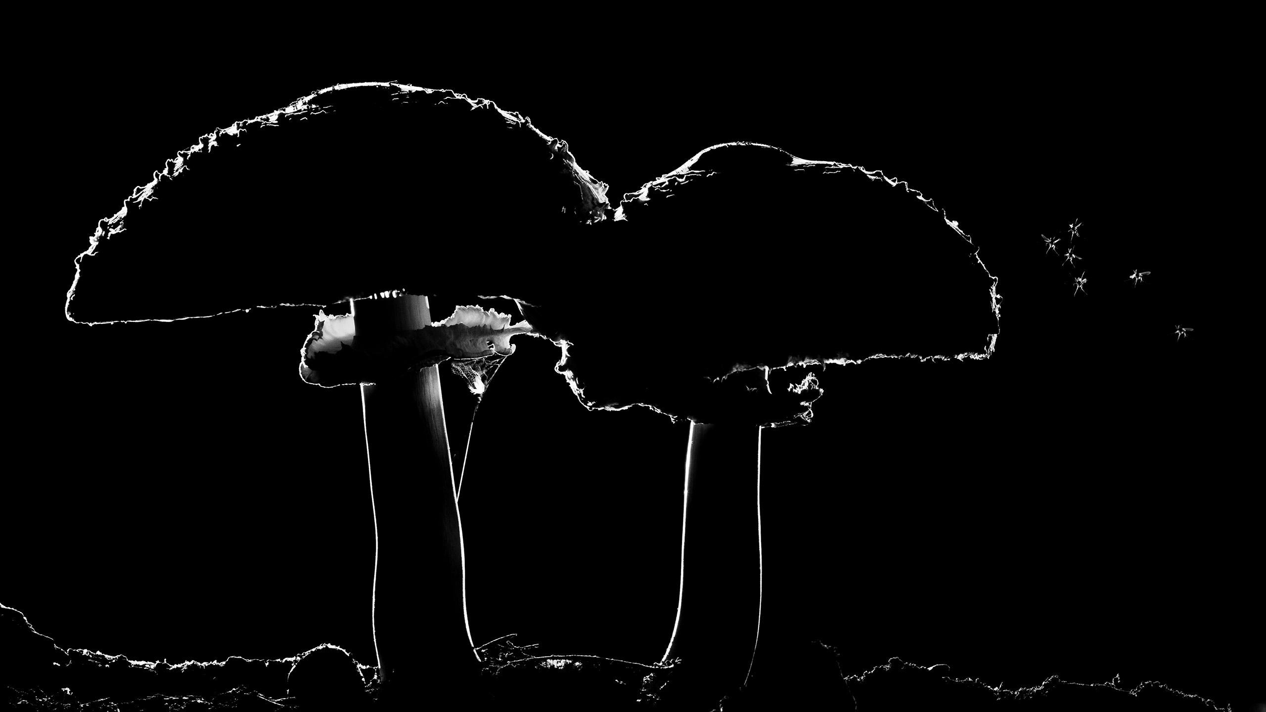Mosquito Mushrooms, © Csaba Gonye, Winner, Golden Turtle Photo Contest