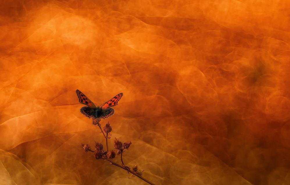 Butterfly, © Luis Clemente Rodríguez, Second Place, Golden Turtle Photo Contest