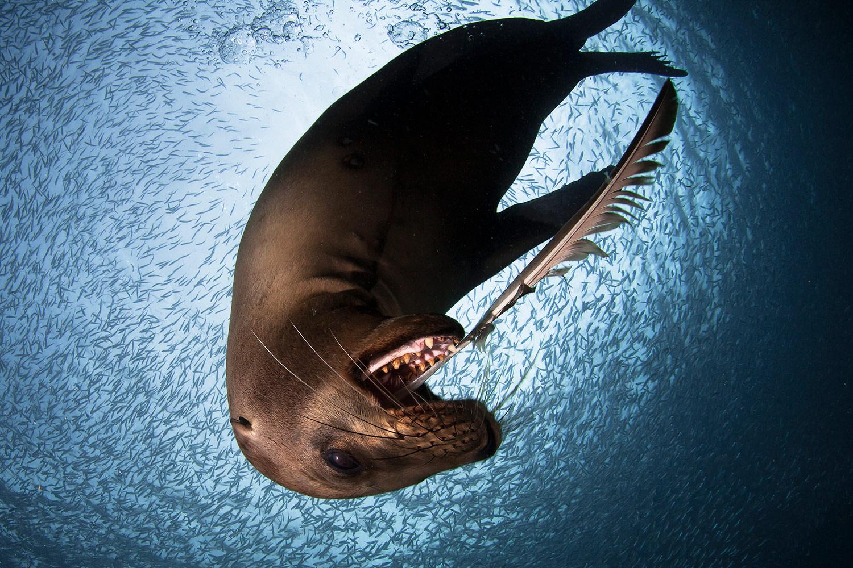 Sea Lion, © Alejandro Prieto, Second Place, Golden Turtle Photo Contest