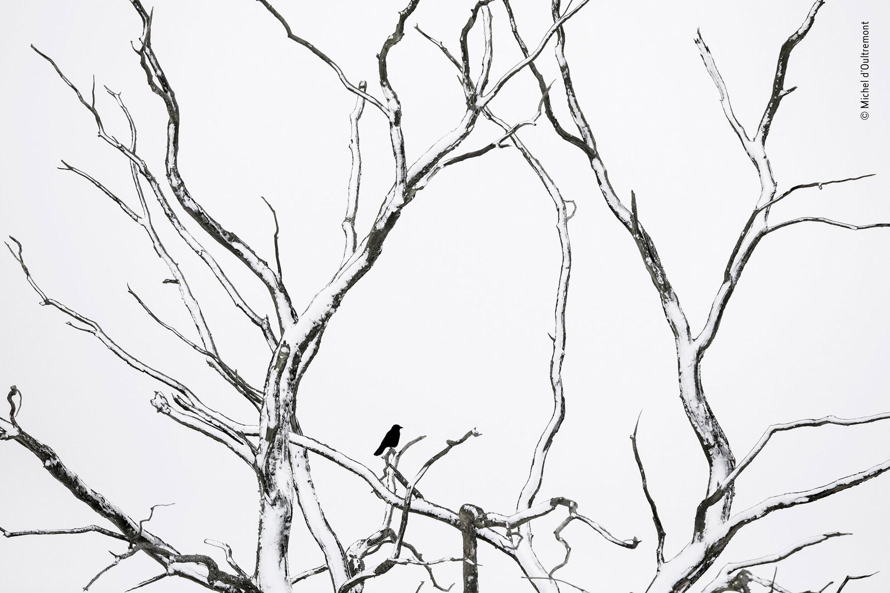 Lines, © Michel Doultremont, Third Place, Golden Turtle Photo Contest