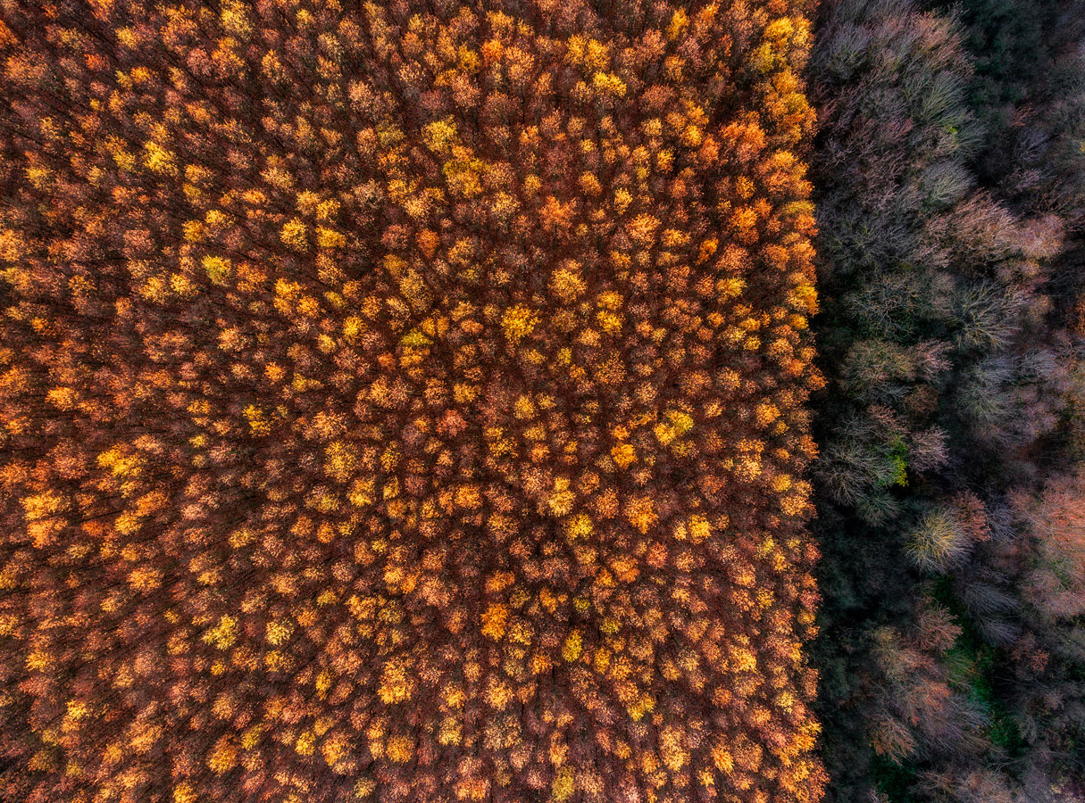 Two Forests, © Csaba Daroczi, Winner, Golden Turtle Photo Contest