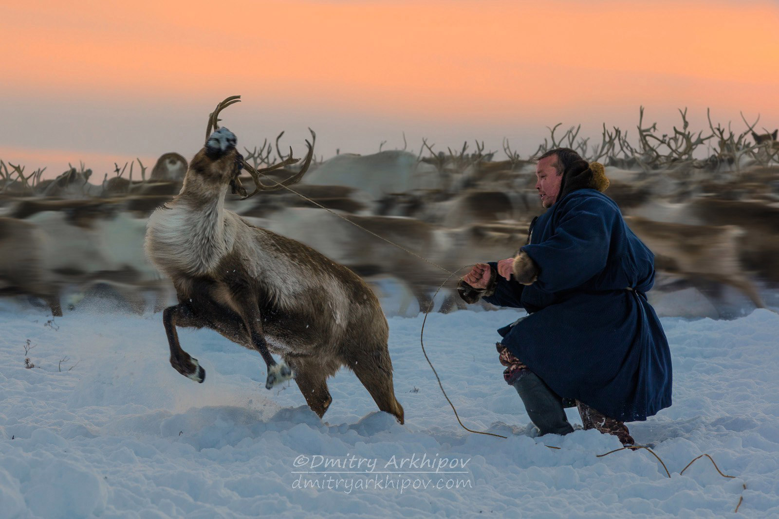 The Reindeer Herdsman, © Dmitry Arkhipov, Second Place, Golden Turtle Photo Contest