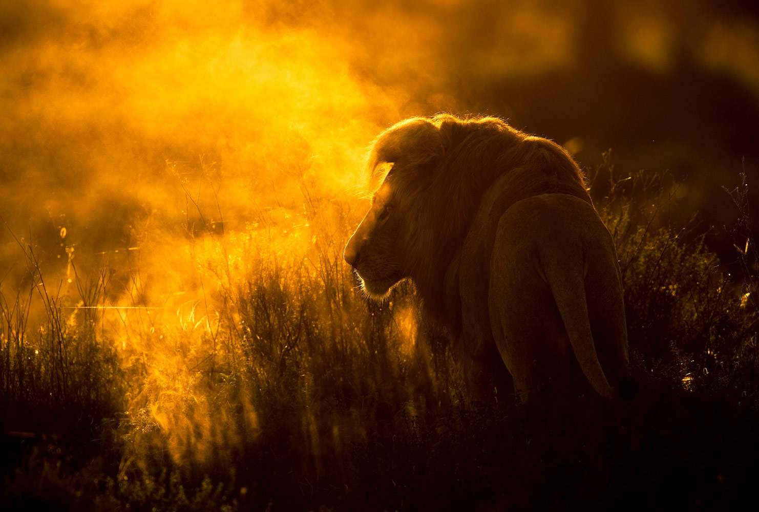 The Lion in the Fog, © Victoras Dubinskas, Winner, Golden Turtle Photo Contest