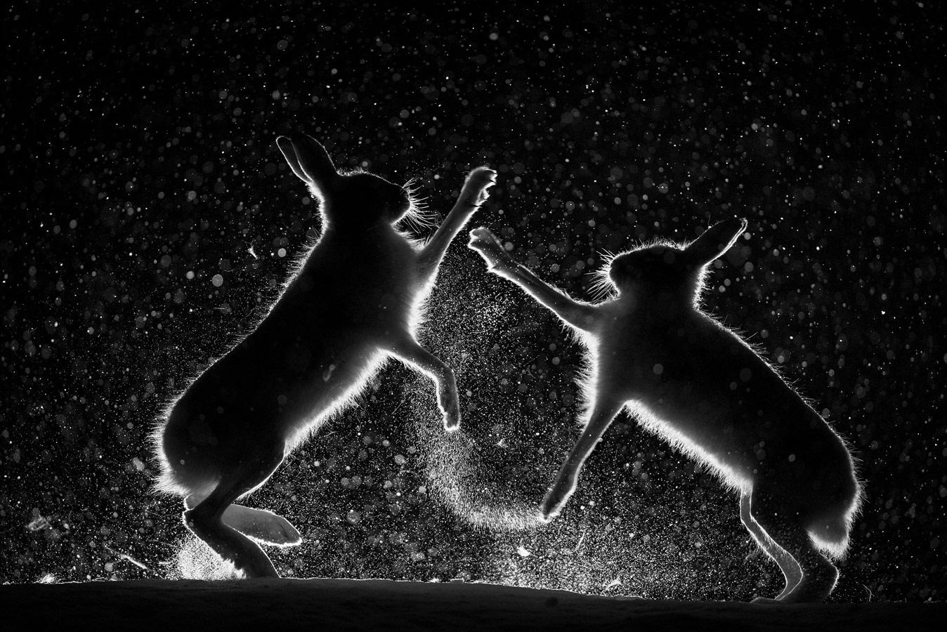 The Snow Scaffle, © Erlend Haarberg, Winner, Golden Turtle Photo Contest