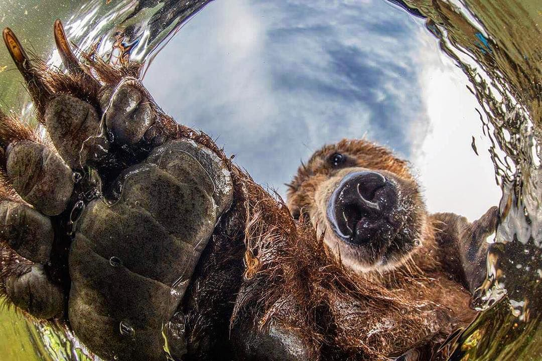 Curios Bear, © Mikhail Korostelev, Third Place, Golden Turtle Photo Contest