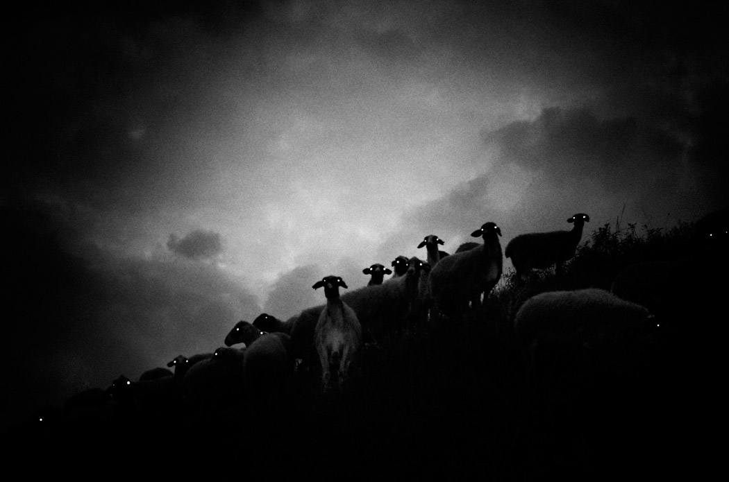 A raven's dream, © Stavros Stamatiou, Best Black & White Picture, Gomma Photography Grant