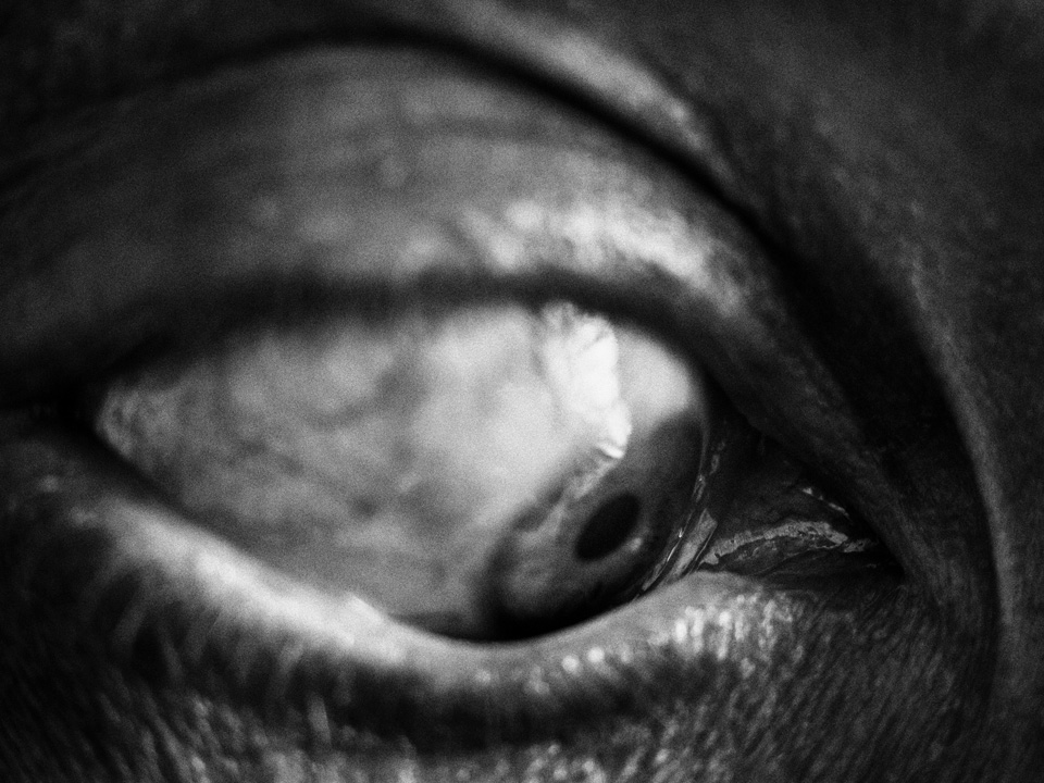 Flashbacks, © Wojciech Grzędziński, Finalist, Grand Prix Fotofestiwal