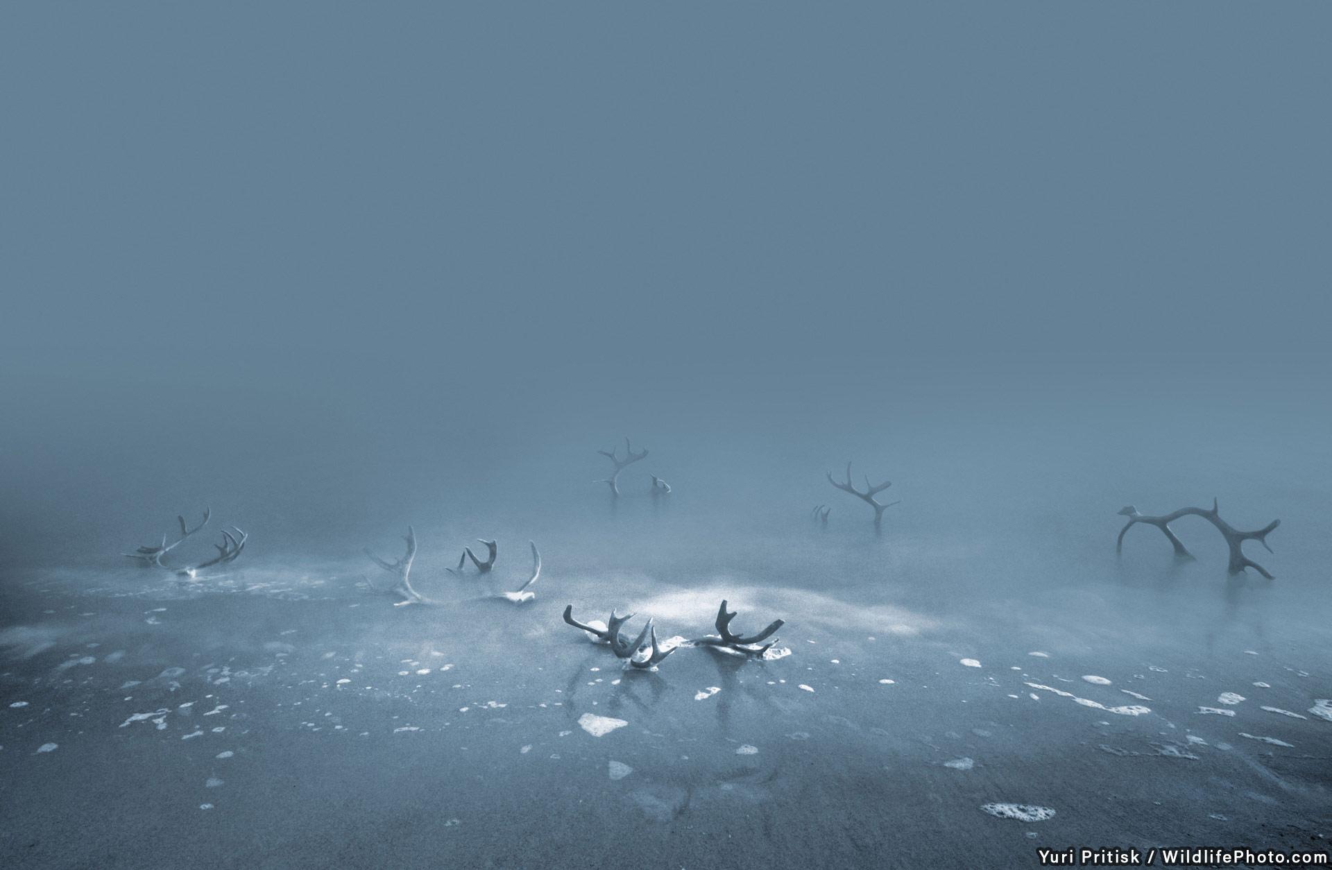 Coast of Jackals, © Yuri Pritisk, Highly Commended, Habitats & Landscapes Photo Contest