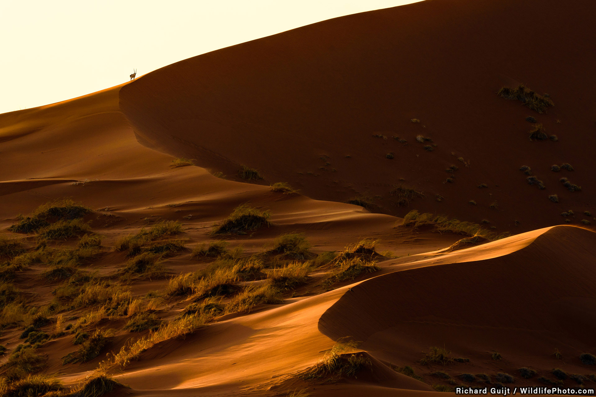 Life in the Desert, © Richard Guijt, Highly Commended, Habitats & Landscapes Photo Contest