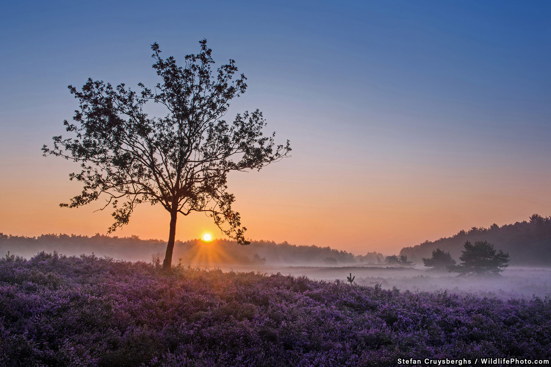 Sunrise at Blekerheide, © Stefan Cruysberghs, Highly Commended, Habitats & Landscapes Photo Contest