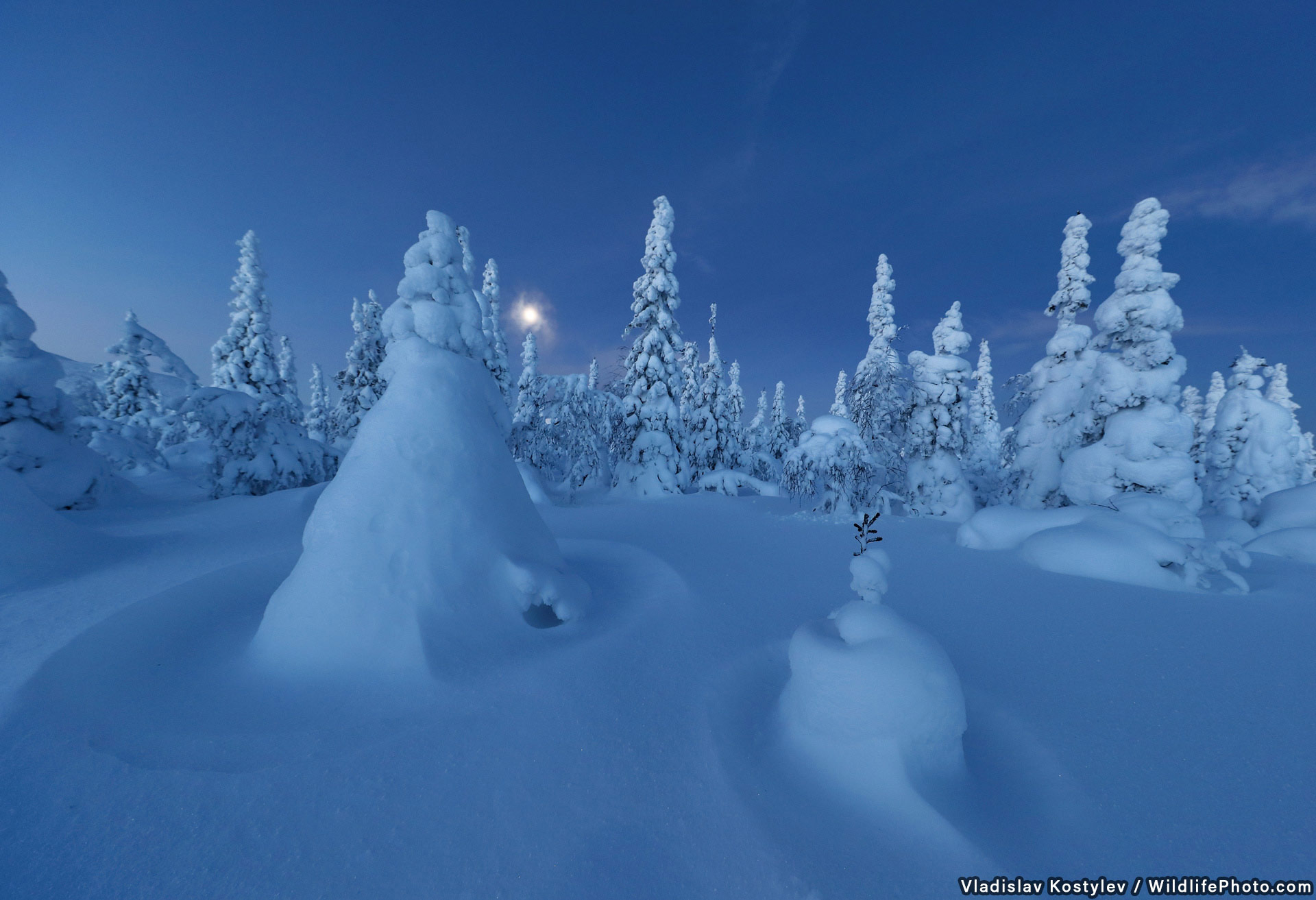 The Winter Forest, © Vladislav Kostylev, Highly Commended, Habitats & Landscapes Photo Contest
