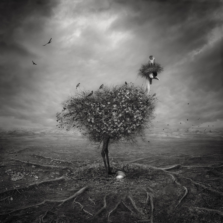 Natura, © Shahrzad Akrami, Iran, «Digital Manipulation» Category, 1st prize winner, Hamdan International Photography Award - HIPA