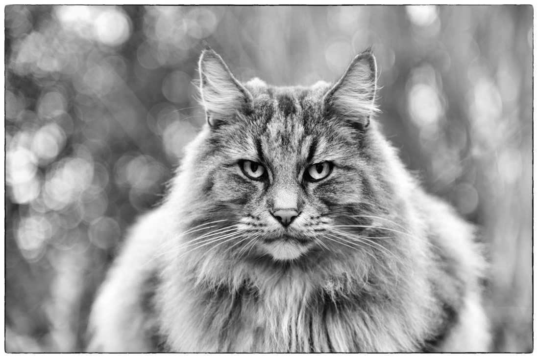 Theme: Cats, I SHOT IT The Best Photo Competition