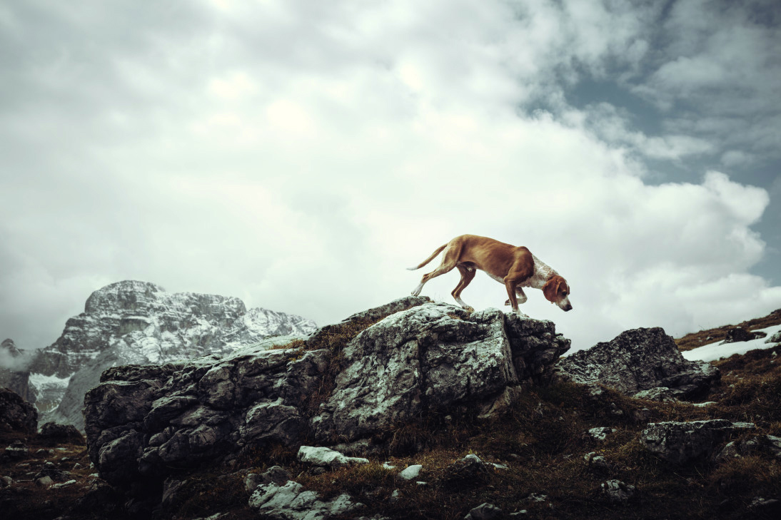 Theme: Dogs, I SHOT IT The Best Photo Competition