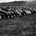 From Labyrinth, © Farshid Tighehsaz, Iran, IAFOR Documentary Photography Award