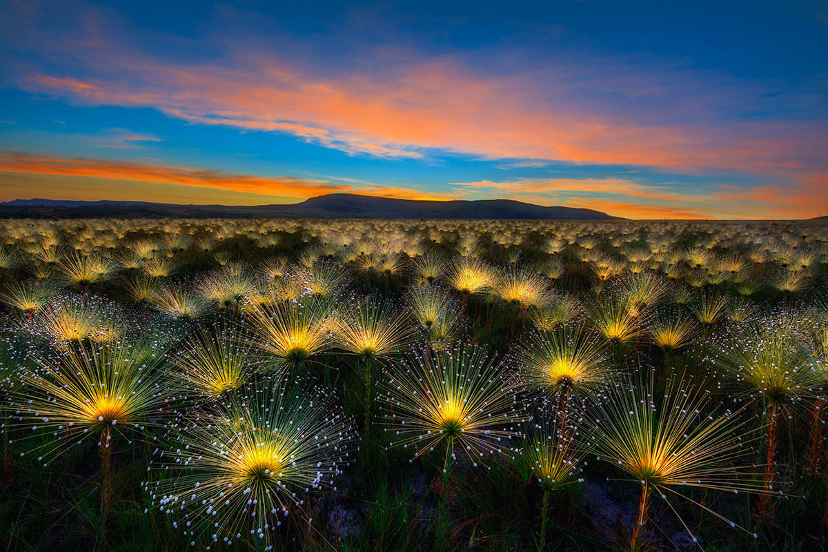 Cerrado Sunrise, © Marcio Cabral, Overall winner, International Garden Photographer of the Year — IGPOTY