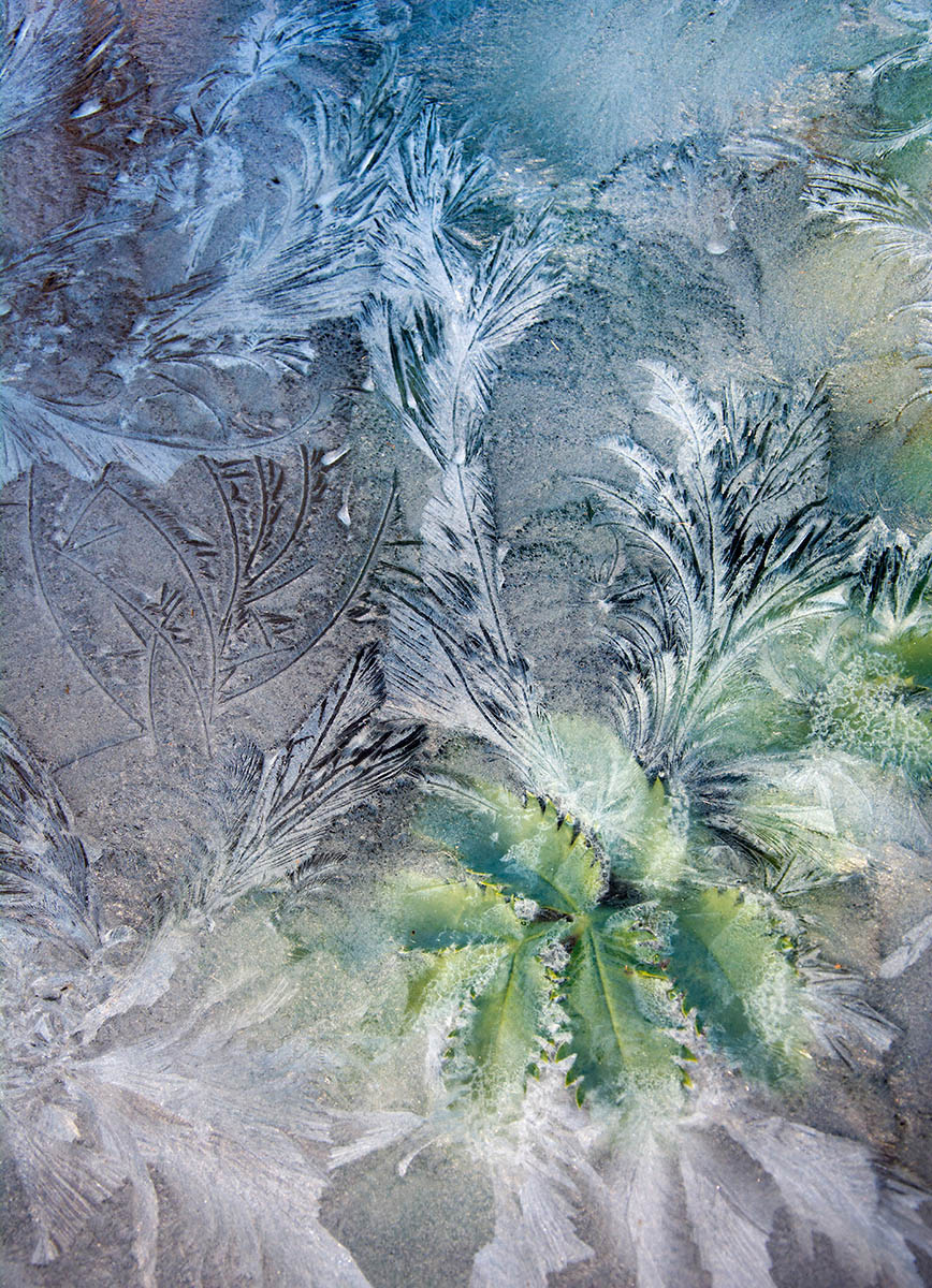 Through Icy Glass, © Carol Casselden, 1st place, International Garden Photographer of the Year — IGPOTY