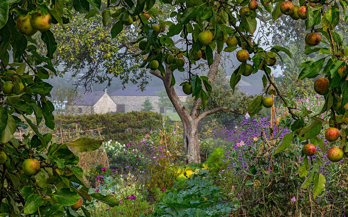 Morning Mist and Mellow Fruitfulness, © Nigel McCall, 1st place, International Garden Photographer of the Year — IGPOTY