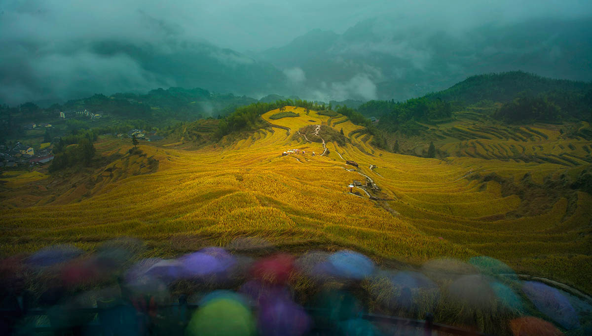 A Good Harvest is in Sight, © Shaofeng Zhang, 2nd place, International Garden Photographer of the Year — IGPOTY
