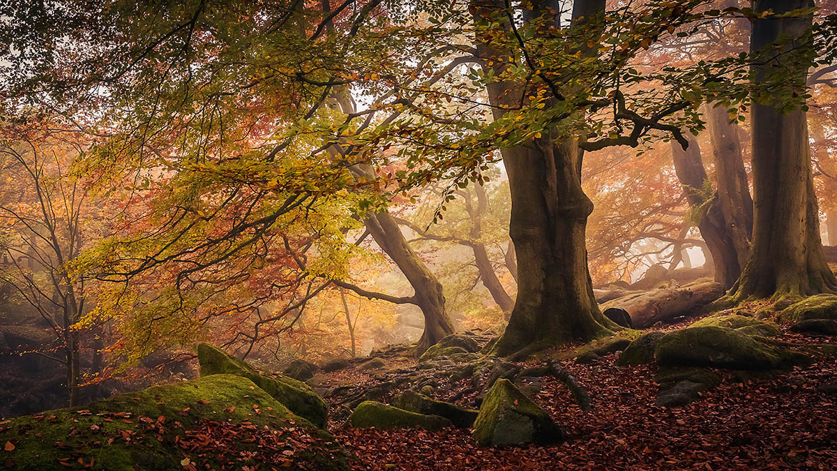 Autumn in Padley Gorge, © Dave Fieldhouse, 1st place, International Garden Photographer of the Year — IGPOTY