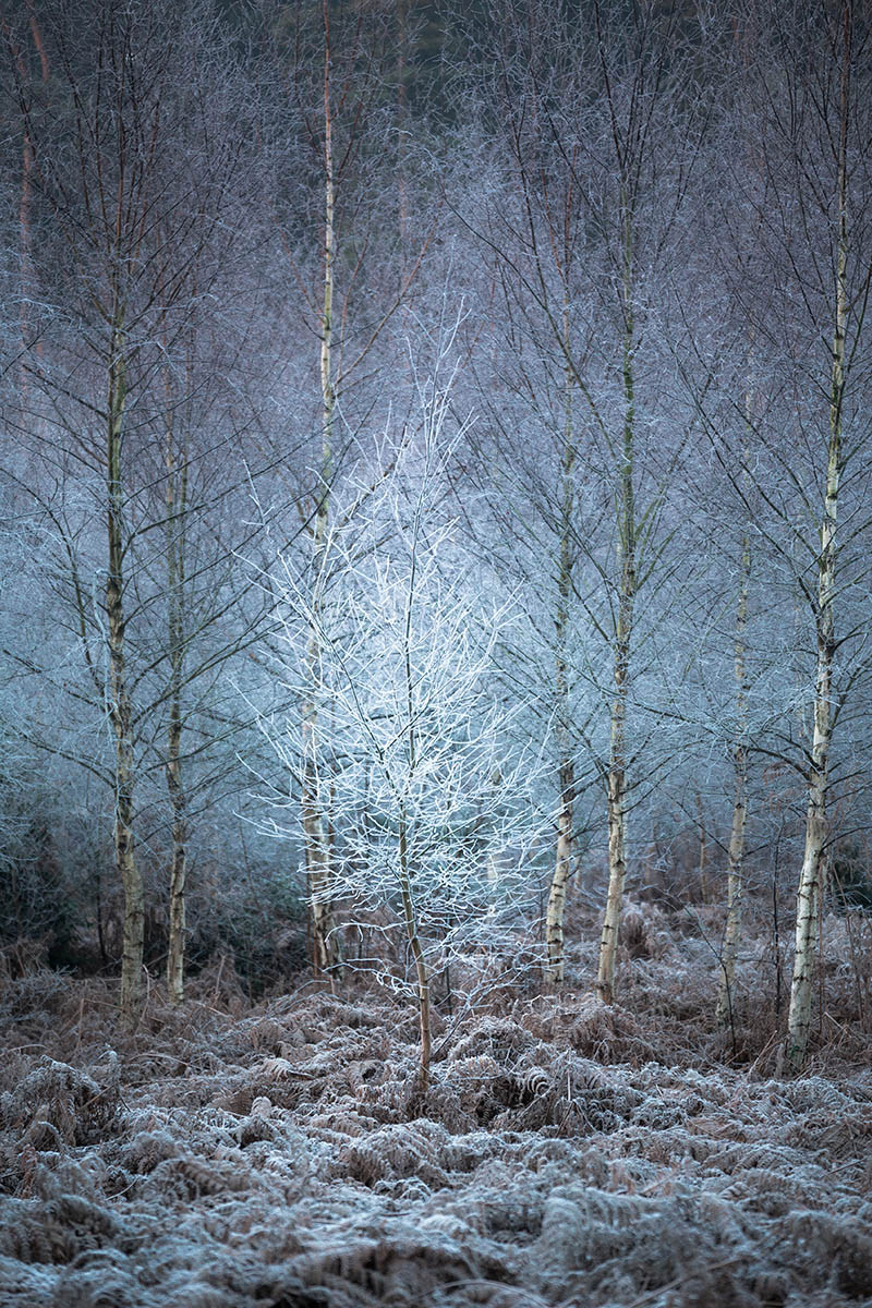 Frostiest Tree In The Forest, © Chris Dale, 3rd place, International Garden Photographer of the Year — IGPOTY