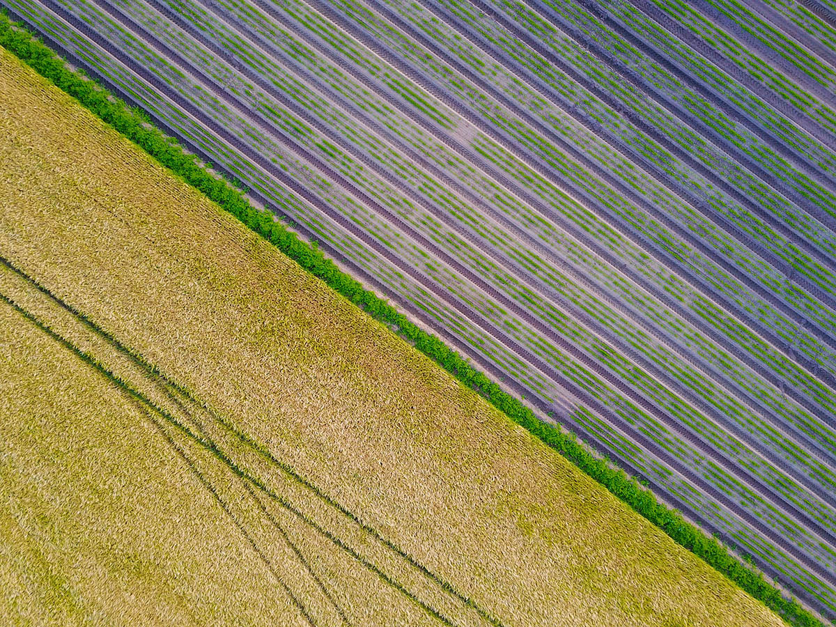 Crop Art, © Will Jenkins, 3rd place, International Garden Photographer of the Year — IGPOTY