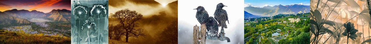 International Garden Photographer of the Year — IGPOTY