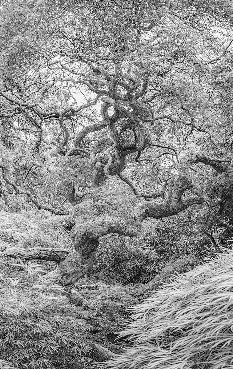 © Simon Hadleigh-Sparks, Jumping Over Karma, International Garden Photographer of the Year — IGPOTY