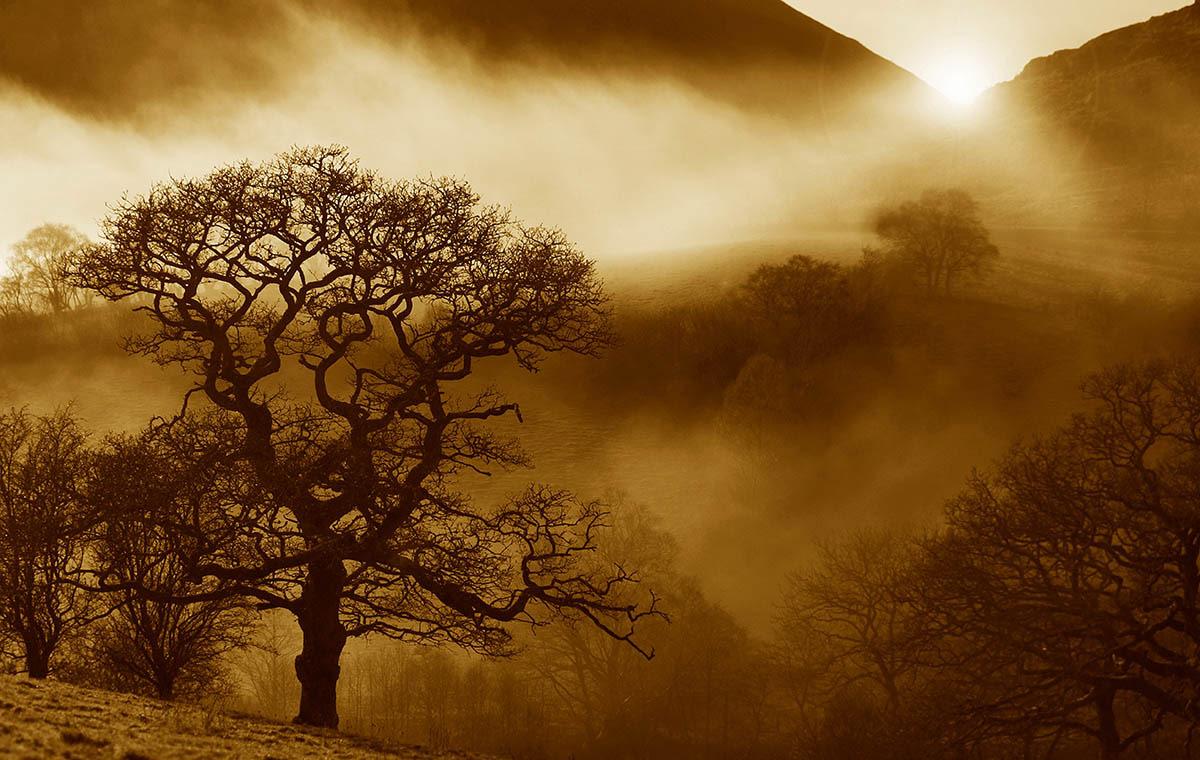 © Alan Price, Oak Sunrise, International Garden Photographer of the Year — IGPOTY