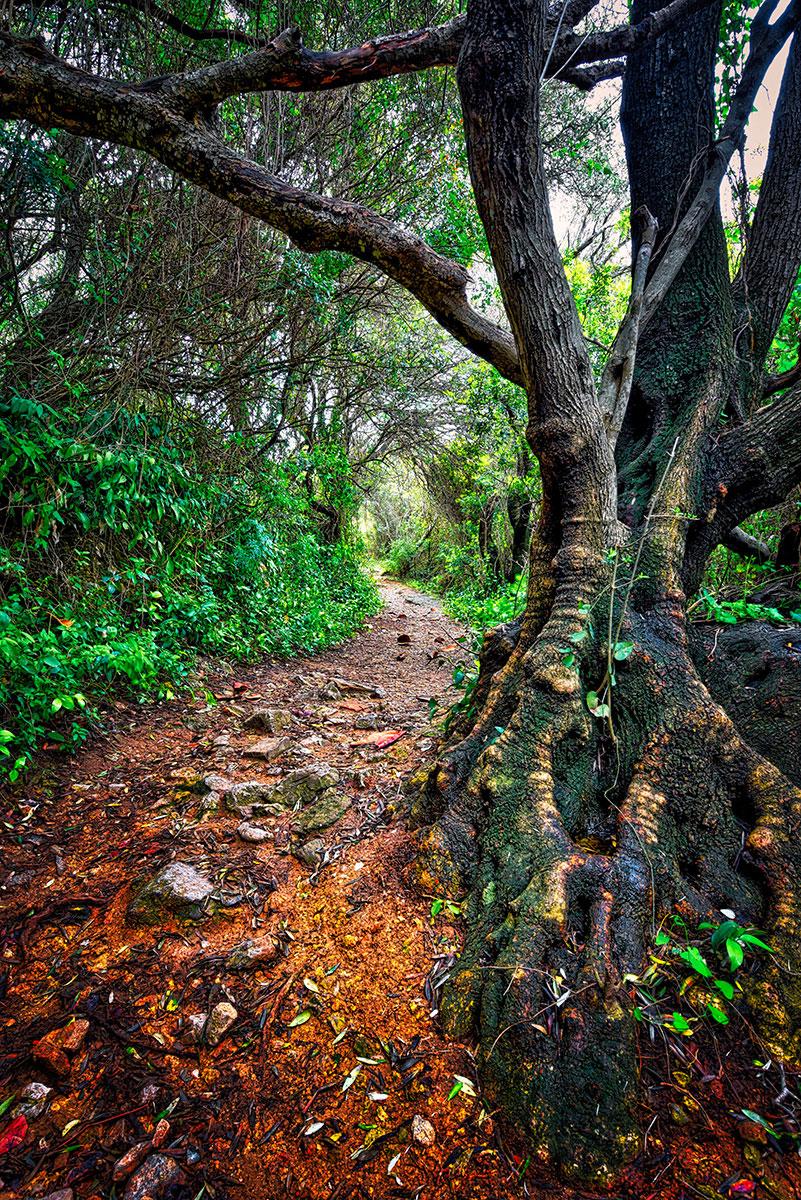 © Ernest Martinez, Passage to the Mediterranean Steps, International Garden Photographer of the Year — IGPOTY