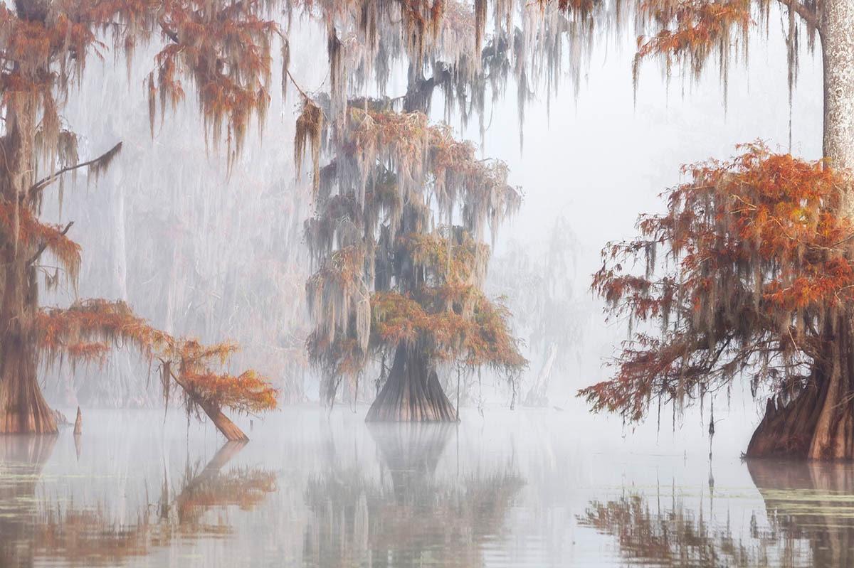 © Roberto Marchegiani, Misty Bayou, International Garden Photographer of the Year — IGPOTY