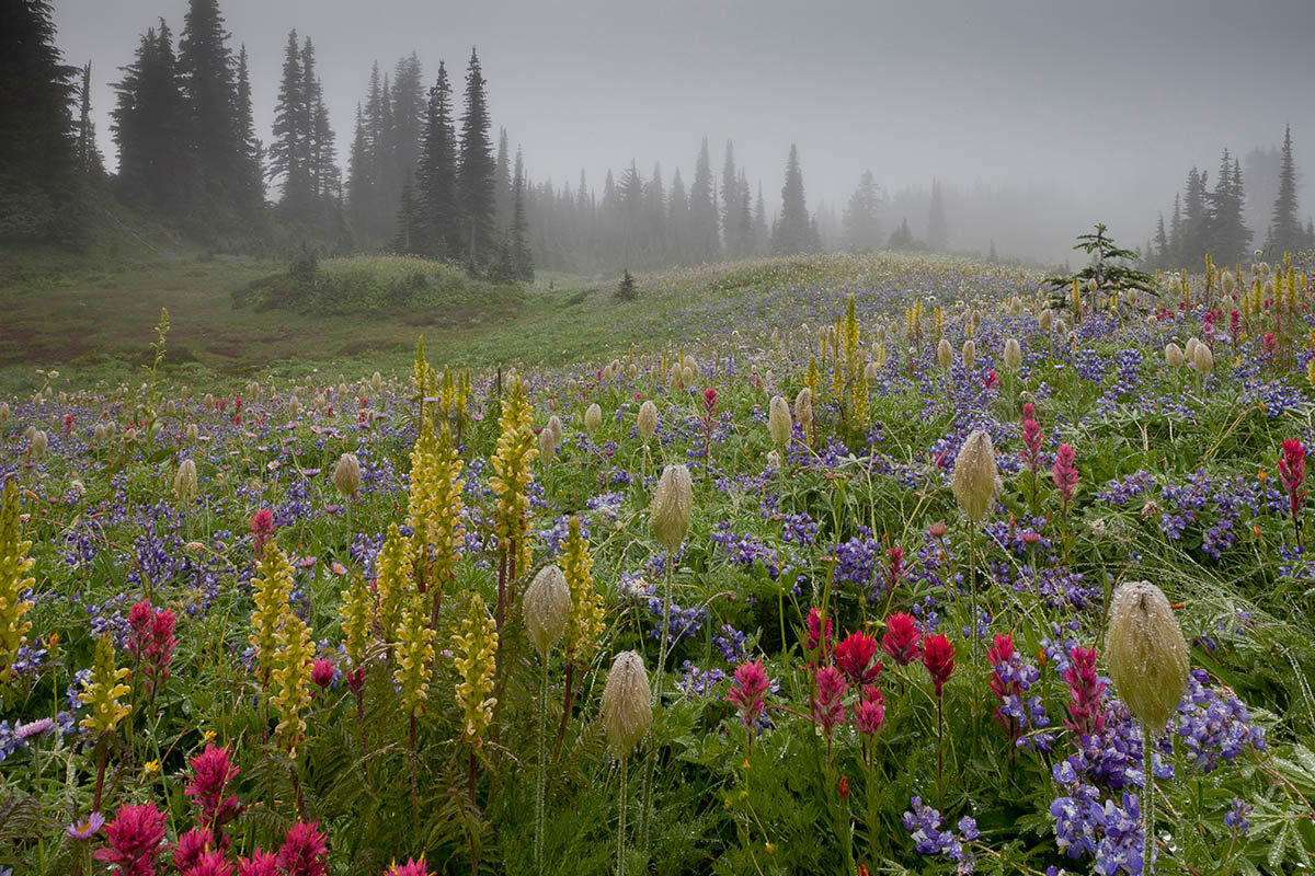 © Bob Gibbons, Mount Rainier in the Mist, International Garden Photographer of the Year — IGPOTY