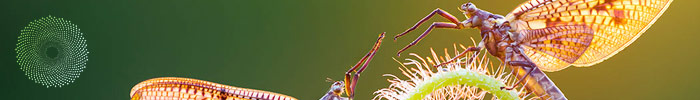 Macro Art Competition - International Garden Photographer of the Year