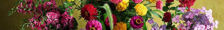 Still Life International Garden Photographer of the Year