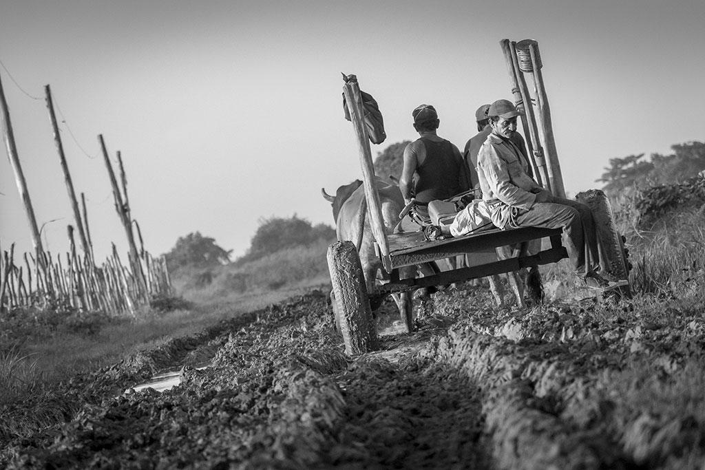 Pensamiento de Camino, © Yoandy Manuel Robaina Fuentes, Ikei Photo Contest