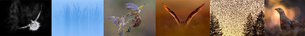 International Wildbird Photo Competition